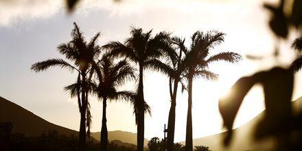I Callao Salvaje på Teneriffa väntar en vacker solnedgång.
