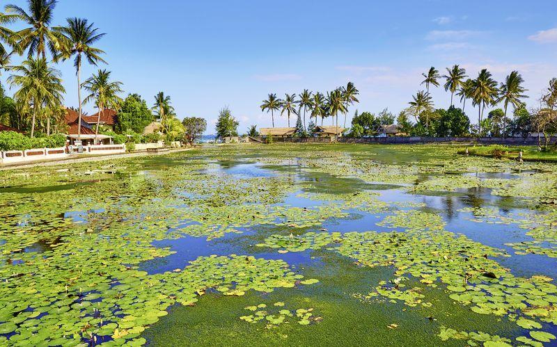 Lotuslagunen i Candi Dasi, Bali.