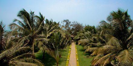 Hotell Chalston Beach Resort i Goa, Indien.