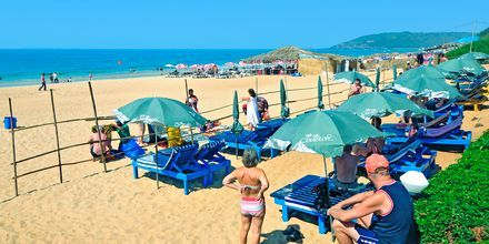 Stranden vid hotell Chalston Beach Resort i Goa, Indien.