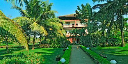 Trädgården på hotell Chalston Beach Resort i Goa, Indien.
