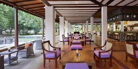 Bar på Cinnamon Lodge Habarana på Sri Lanka.