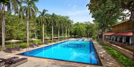 Poolen på Cinnamon Lodge Habarana på Sri Lanka.
