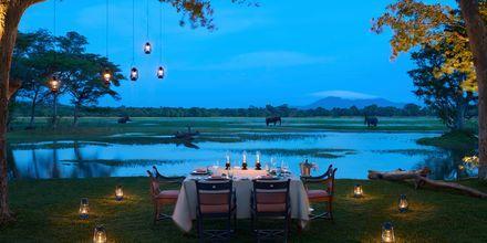 Middag utomhus på hotell Cinnamon Lodge Habarana på Sri Lanka.