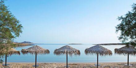 Stranden vid hotell Contaratos Beach på Paros, Grekland.