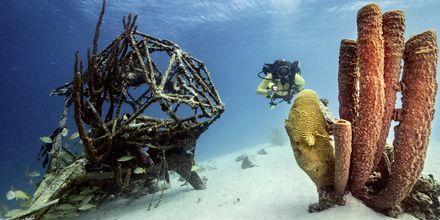 Curaçao är en av världens bästa dykdestinationer.
