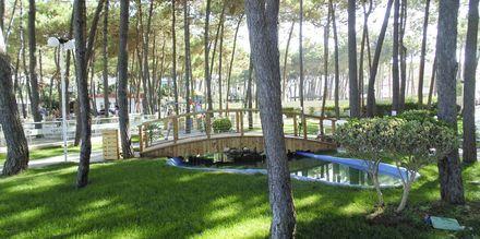 Den lummiga trädgården på Diamma Resort, Durres riviera, Albanien.