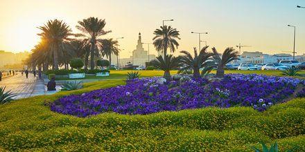 Blombädd på strandpromenaden i Doha, Qatar.