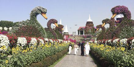 Botaniska trädgården Dubai Miracle Garden i Al Barsha-området i Dubai, Förenade Arabemiraten.