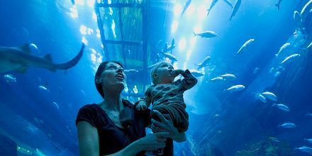 Akvarium i Dubai Mall, Förenade Arabemiraten.