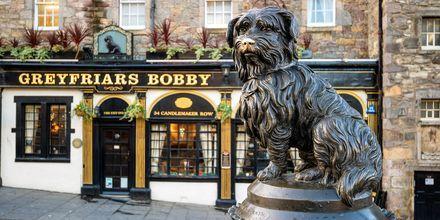 Greyfriars Bobby, en känd staty i Edinburgh.