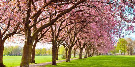 Meadows Park i Edinburgh.