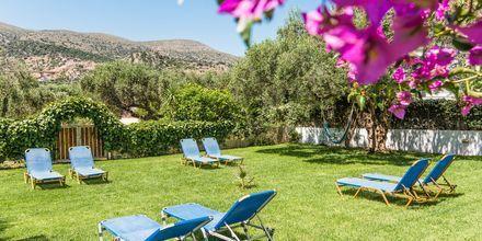 Solstolar på hotell Emerald i Malia på Kreta.