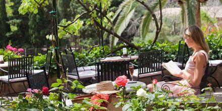 Trädgård på hotell Es Port i Puerto de Sóller, Mallorca.