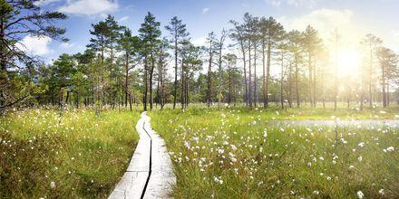Härlig natur i Lahemaa nationalpark, Estland.