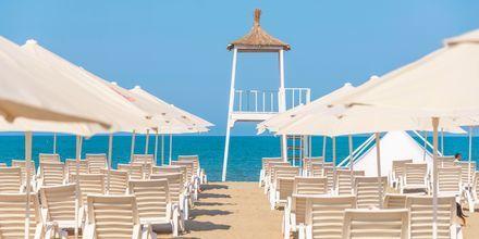 Stranden vid hotell Fafa Grand Blue i Durres Riviera i Albanien.