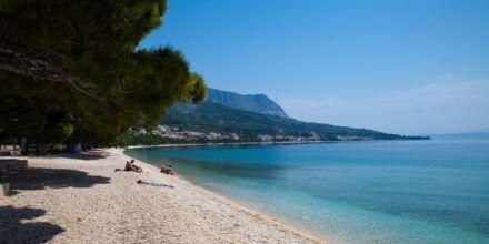 Stranden nedanför hotell Flora i Tucepi.