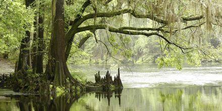 Everglades i Florida.