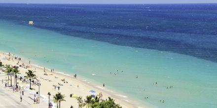 Stranden i Fort Lauderdale i Florida, USA.
