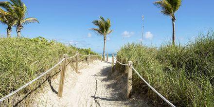 Strand i Miami, USA.