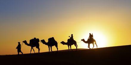 Solnedgång i öken, Dubai, Förenade Arabemiraten.