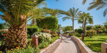 Hotell Fort Arabesque Resort, Spa & Villas i Makadi Bay, Egypten.