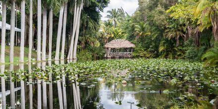 Museet Bonnet House i Fort Lauderdale utgör en härlig, lugn oas mitt i staden.