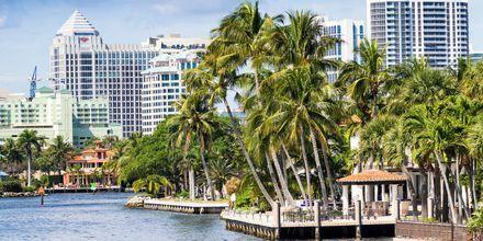 Fort Lauderdale och Florida är kända för sitt varma klimat året om, och ståtliga palmer.