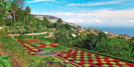 Botaniska trädgården i Funchal, som vi även kommer besöka under premiumresan,