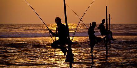 Lokala fiskare i Galle på Sri Lanka.