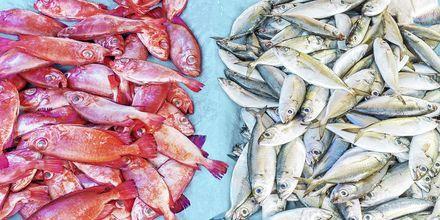 Fiskmarknaden i Galle på Sri Lanka.