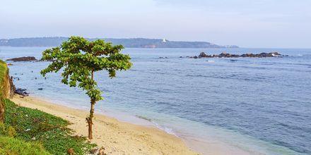 Stranden vid Galle Fort.