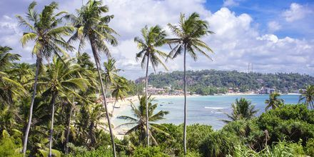 Unawatuna Beach strax utanför Galle, Sri Lanka.