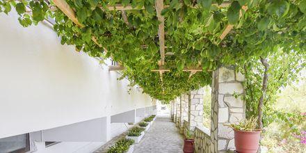Hotell Glicorisa Beach i Pythagorion, Samos.