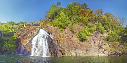Dudshagar Falls i Goa, Indien.