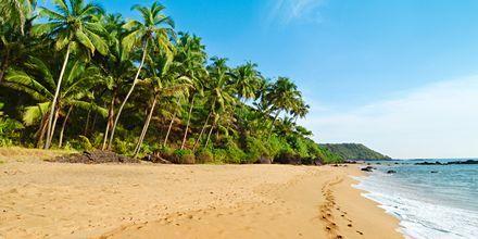 Strand i Goa, Indien.