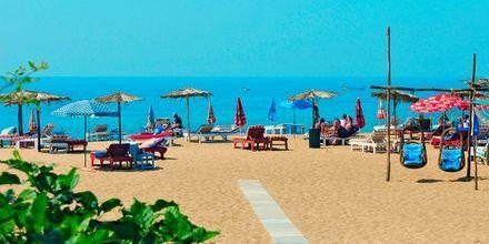 Stranden vid hotell Goan Heritage i Norra Goa, Indien.