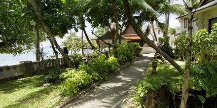 Trädgården på Golden Beach Resort i Ao Nang, Krabi.