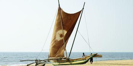 Fiskebåt på stranden vid hotell Golden Star Beach i Negombo på Sri Lanka.