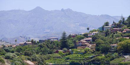 Vinodlingarna runt byn Bandama på Gran Canaria.
