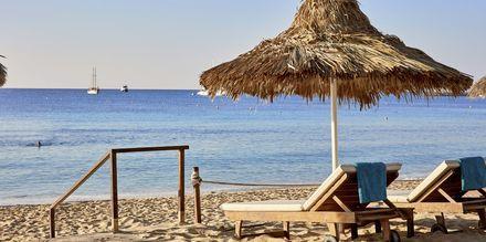 Stranden vid på hotell Grecian Bay, Cypern.
