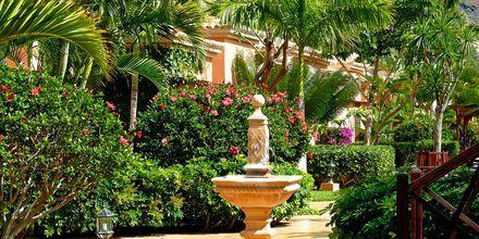 Trädgård på Green Garden Resort i Playa de las Americas på Teneriffa.