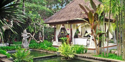 Spat på hotell Griya Santrian i Sanur, Bali.