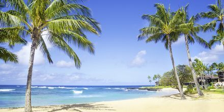 Strand på ön Kauai i Hawaii.
