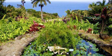 Botaniska trädgården på Maui.