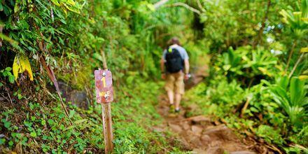 Se mer av Hawaii - gå på en vandring!