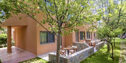 Grönskande omgivningar på hotell High Beach i Malia på Kreta, Grekland.
