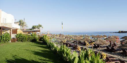 Hotell High Beach i Malia på Kreta, Grekland.