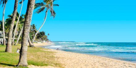Strand i Hikkaduwa på Sri Lanka.
