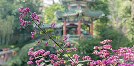 Ett tempel i Hong Kong, Kina.